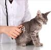 Ветеринарные клиники в Большом Козино